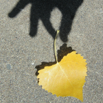shadow of hand holding leaf